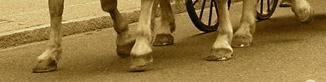 Pieds de chevaux
