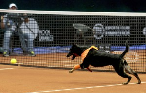 648x415_un-chien-court-apres-une-balle-de-tennis-lors-de-l-open-du-bresil-a-sao-paulo-le-25-fevrier-2016-ap